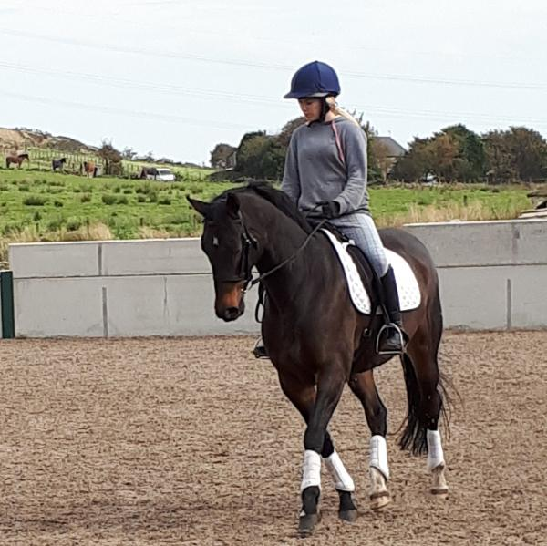 Dressage horses for sale | Horses for sale